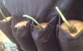Meet Amina The Teen Who Refused To Detonate Her Explosive